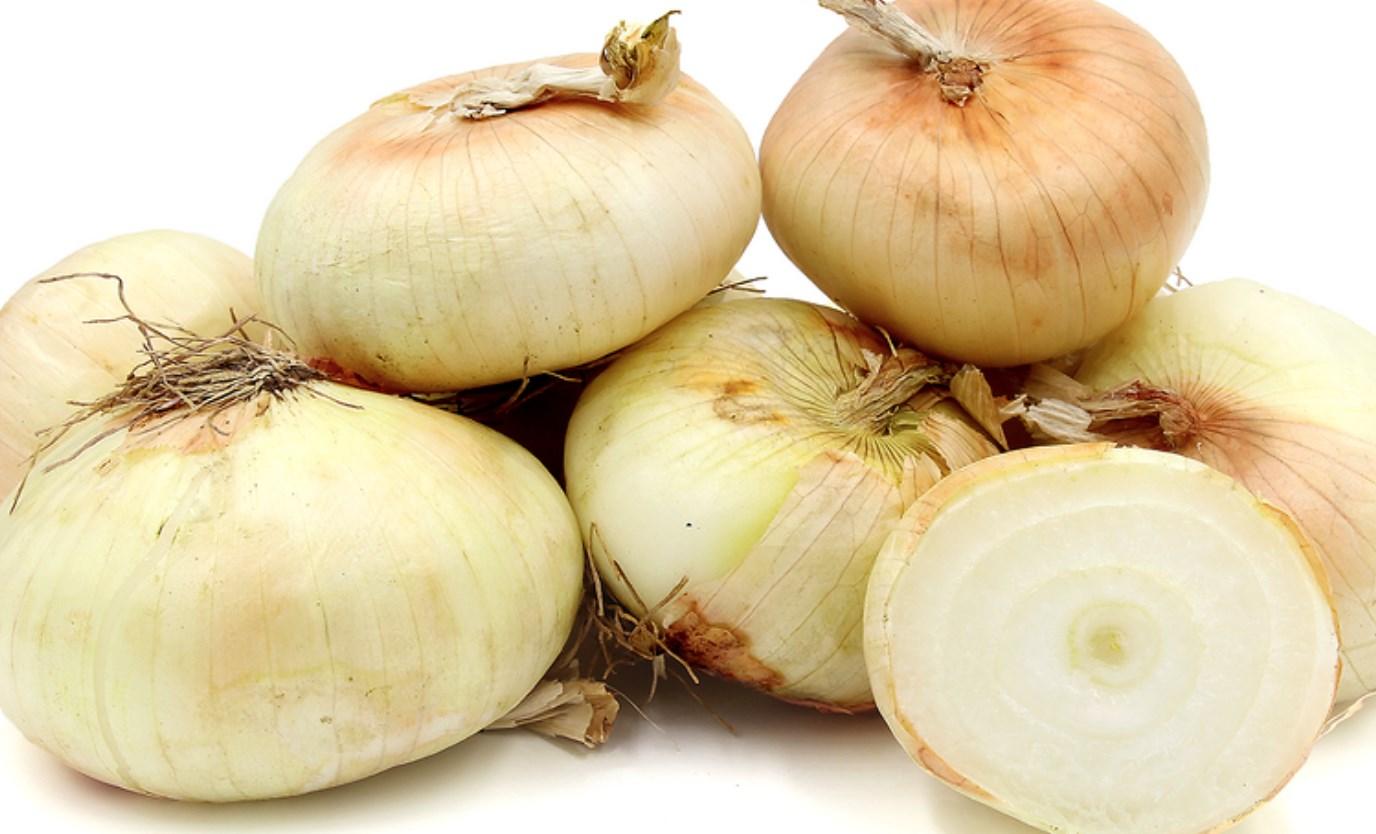 أنواع البصل - البصل الأبيض
