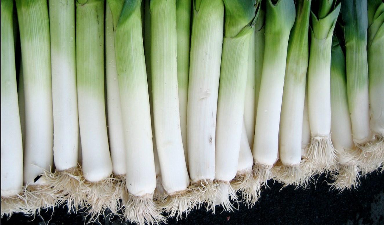 أنواع البصل - الكراث