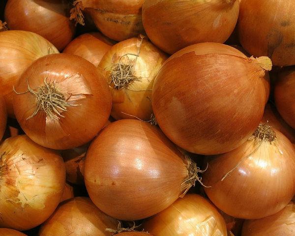 أنواع البصل - البصل الأصفر