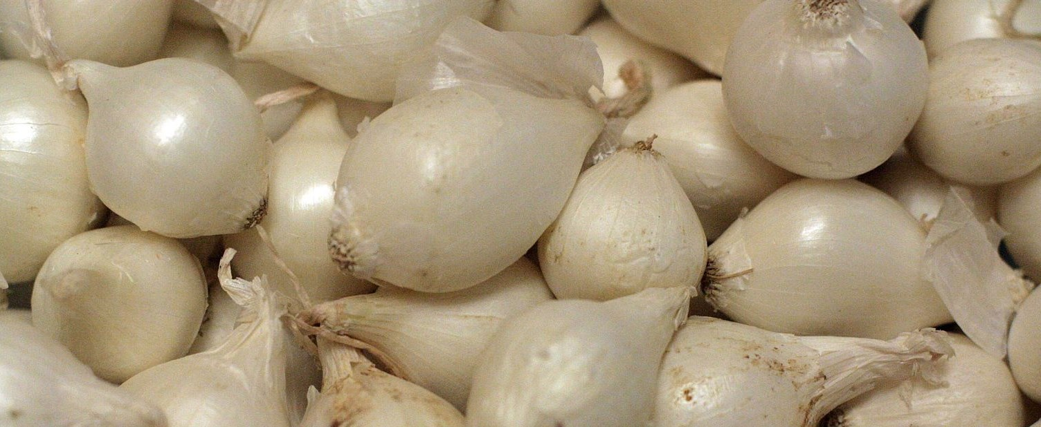 أنواع البصل - البصل اللؤلؤي