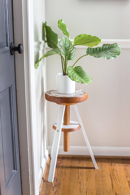 تزيين ممرات المنزل - نباتات
