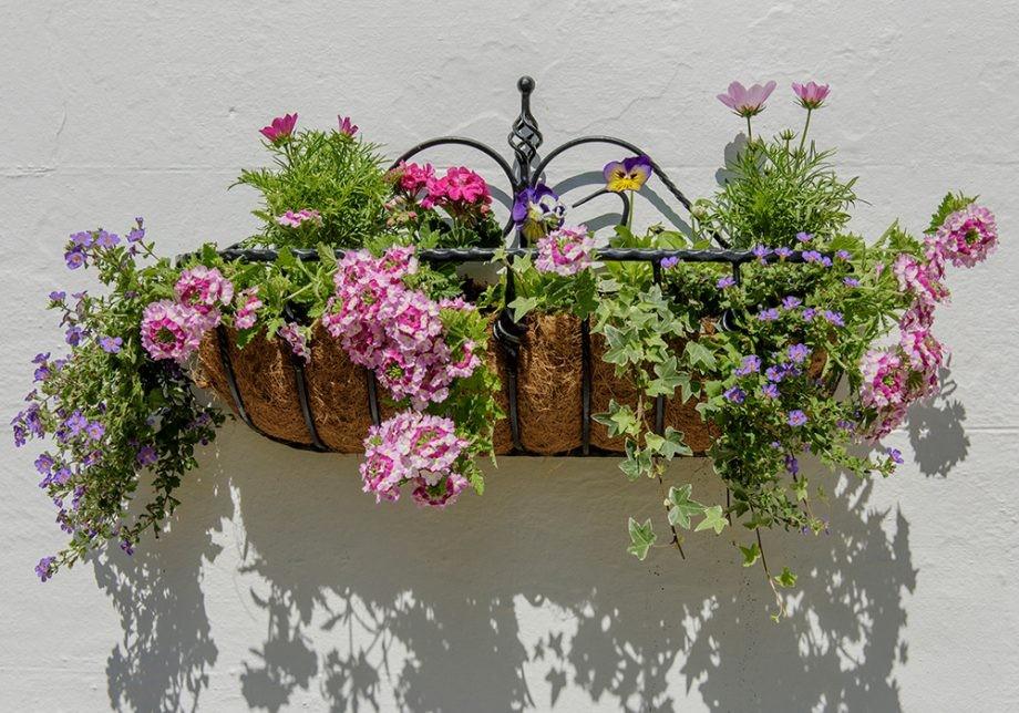تصميم حديقة المنزل - تعليق الزهور